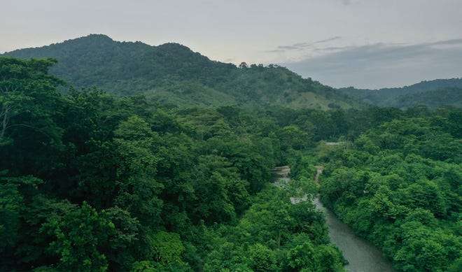 Darien Gap forest with river running through on a foggy day.